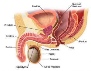 dacă penisul este mic presiune scăzută și erecție slabă