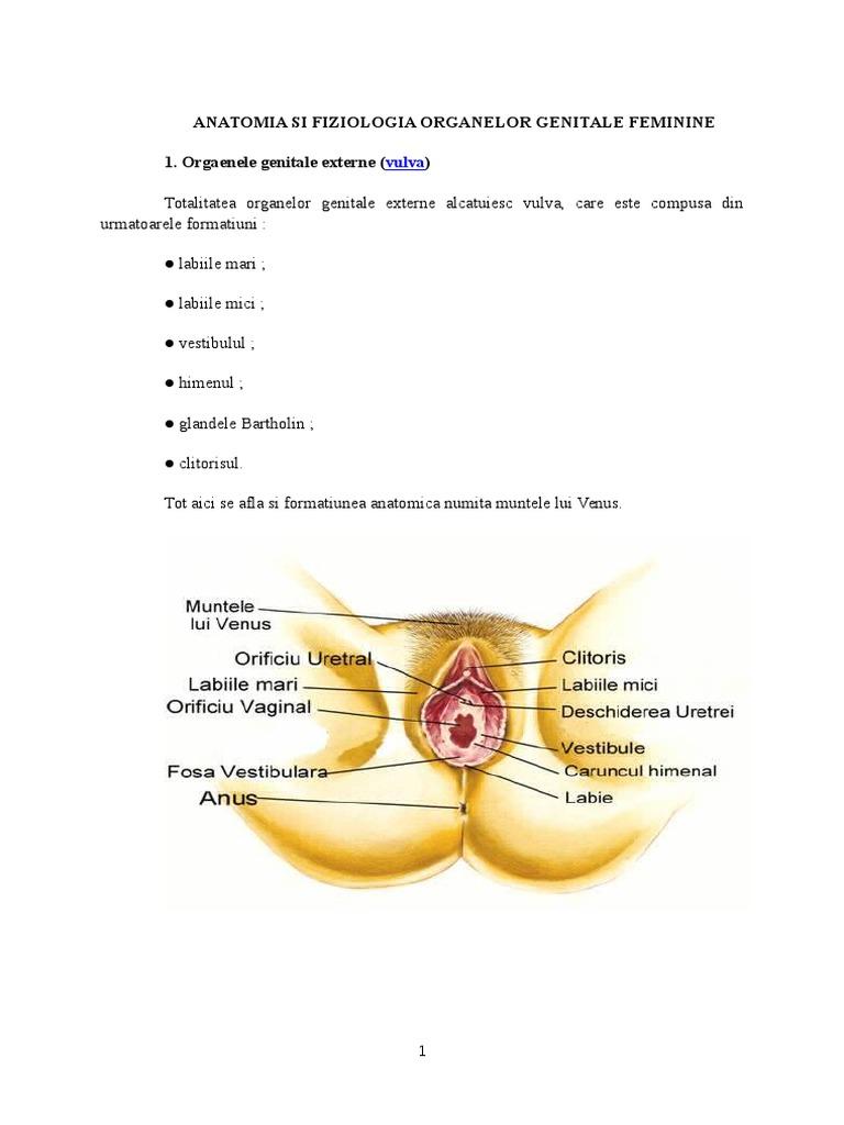 ce poate fi de la erecția prelungită penisul nu crește ce să facă