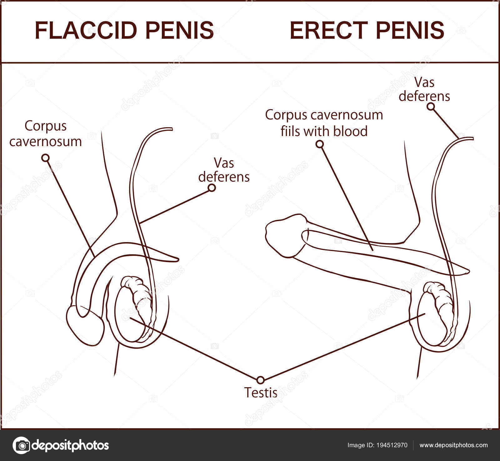 schema de erecție sexuală lipsa erecției