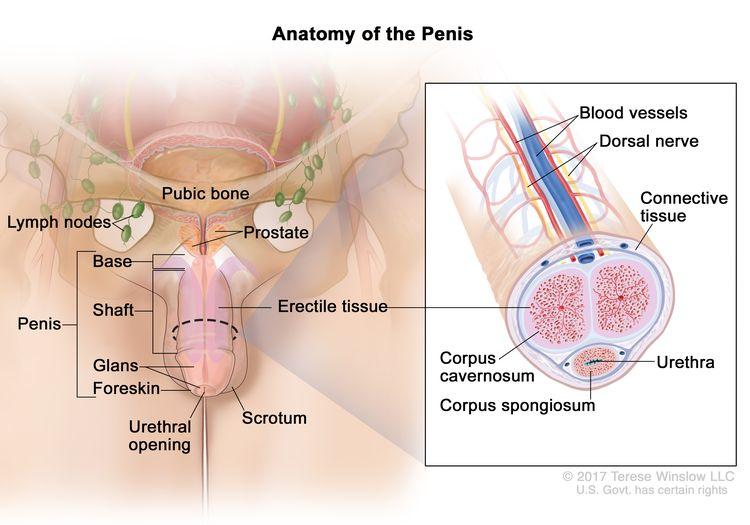 neoplasme pe penis cum coboara penisul