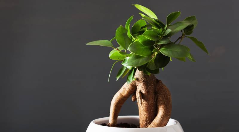 planta care imbunatateste erectia călăreț de penis