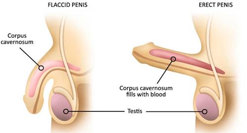 de ce atunci când nu există erecție mică ce dacă sunt penis