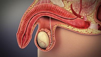 sănătatea penisului și mărirea medicamente pentru creșterea penisului