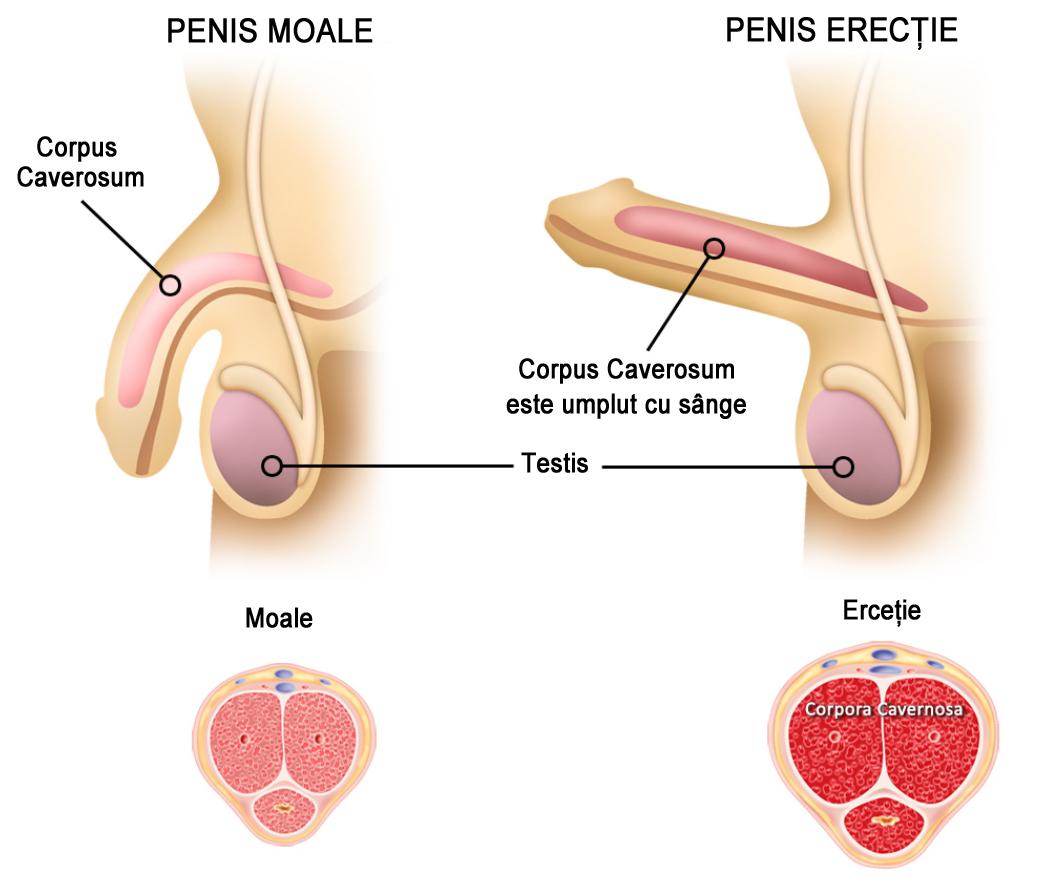 erecție la un bărbat la 22 de ani ce exerciții ar trebui făcute pentru penis
